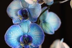 Orkidé Arkivfoto