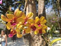Orkidé eller blomma i Thailand Arkivfoton