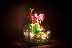 Orkidé i en glass vas Arkivbilder