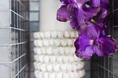 Orkidé i krukan som dekoreras i rum Arkivbild