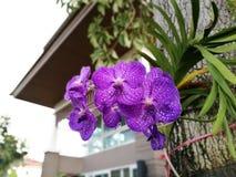 Orkidé i mitt hem Royaltyfria Bilder