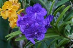 Orkidé i sommar Arkivbild