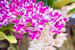 Orkidé i trädgård Royaltyfri Bild