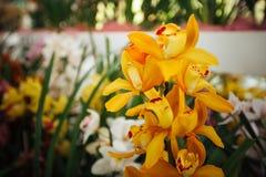 Orkidé i växthuset Arkivfoton