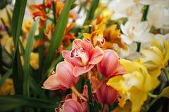 Orkidé i växthuset Arkivbilder