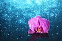 Orkidé i vatten Arkivbilder
