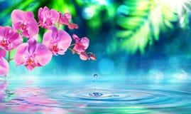 Orkidé i zenträdgård med lilla droppen royaltyfri fotografi