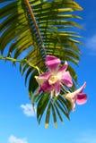 Orkidé med palmbladnärbild Royaltyfri Foto