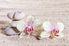 Orkidé med zenstenar Royaltyfri Foto