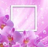 Orkidé- och fotoram Arkivfoto