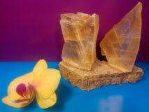Orkidé och kristall arkivbild