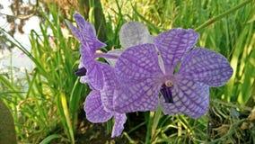 Orkidé och natur Arkivbild