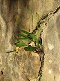 Orkidé och skuggor Arkivfoto