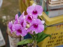 Orkidé orkidér, blomma, vit, vår, blom- som är härlig, natur, flora, blom, gräsplan, bakgrund, design, trädgård, lantgård, växt,  royaltyfri fotografi