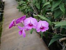 Orkidé orkidér, blomma, vit, vår, blom- som är härlig, natur, flora, blom, gräsplan, bakgrund, design, trädgård, lantgård, växt,  arkivfoton