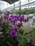 Orkidé orkidér, blomma, vit, vår, blom- som är härlig, natur, flora, blom, gräsplan, bakgrund, design, trädgård, lantgård, växt,  fotografering för bildbyråer