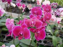 Orkidé orkidér, blomma, vit, vår, blom- som är härlig, natur, flora, blom, gräsplan, bakgrund, design, trädgård, lantgård, växt,  arkivbilder