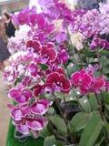 Orkidé orkidér, blomma, vit, vår, blom- som är härlig, natur, flora, blom, gräsplan, bakgrund, design, trädgård, lantgård, växt,  royaltyfri bild