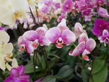 Orkidé orkidér, blomma, vit, vår, blom- som är härlig, natur, flora, blom, gräsplan, bakgrund, design, trädgård, lantgård, växt,  arkivbild