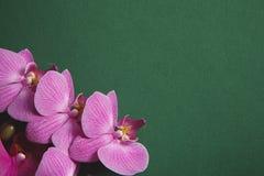 orkidé på brunnsort för grön tabell Arkivbilder
