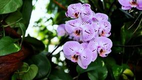 Orkidé på den gröna sidan arkivfilmer