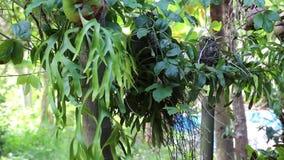 Orkidé på gräsplanen stock video