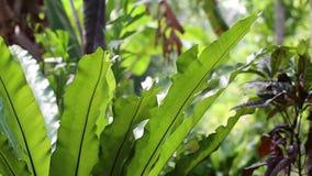 Orkidé på gräsplanen arkivfilmer