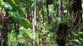 Orkidé på gräsplanen lager videofilmer