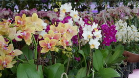 Orkidé på MAHA Malaysia royaltyfri bild