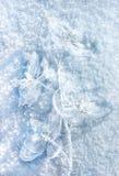 Orkidé på snön Arkivfoton