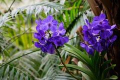 Orkidé på suddig bakgrund Royaltyfri Fotografi