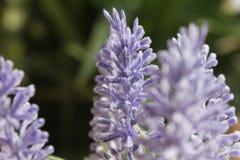 Orkidé som på våren blommar solen Royaltyfria Foton