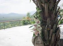 Orkidé som växer på träd i Thailand Arkivfoto