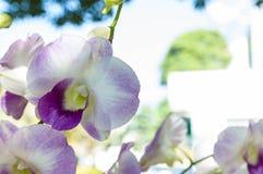 Orkidébakgrund royaltyfri fotografi