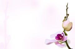 Orkidébakgrund på stambakgrunden Royaltyfri Bild