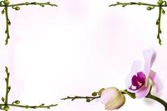 Orkidébakgrund på stambakgrunden Stammar i hörnen Arkivfoton
