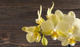 Orkidéblomma över träbakgrund Arkivbild