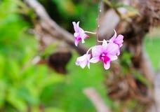 Orkidéblomma Royaltyfri Fotografi