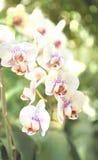 Orkidéblomma Royaltyfria Foton