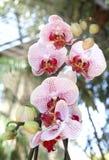 Orkidéblomma Royaltyfri Bild