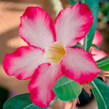 Orkidéblomma Arkivfoton