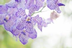 Orkidéblomma Arkivfoto