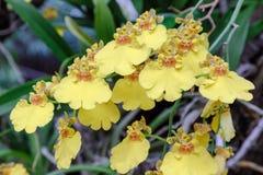 Orkidéblomma i orkidéträdgård på vintern eller vårdagen arkivfoton