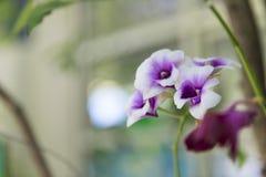 Orkidéblomma i parkera Arkivbilder