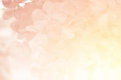 Orkidéblomma i söt mjuk färg Royaltyfria Bilder