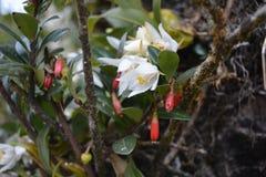 Orkidéblomma i skogen bredvid vägen arkivbild