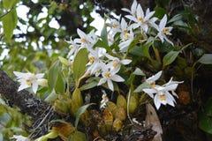 Orkidéblomma i skogen bredvid vägen royaltyfri bild