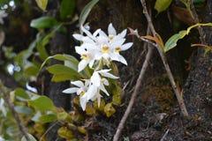 Orkidéblomma i skogen bredvid vägen royaltyfria bilder
