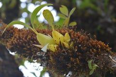 Orkidéblomma i skogen bredvid vägen royaltyfri foto