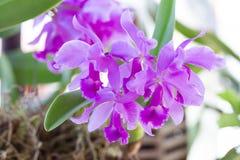 Orkidéblomma i trädgård på vintern eller vårdagen fotografering för bildbyråer